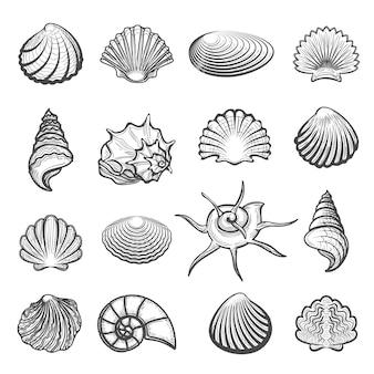 Conjunto de conchas do mar desenhada de mão