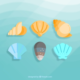 Conjunto de conchas do mar