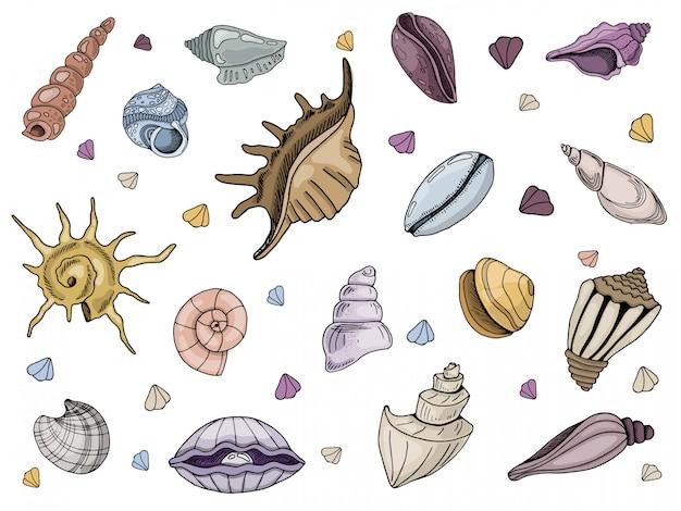 Conjunto de conchas sobre um fundo branco