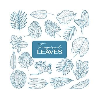 Conjunto de contorno de ícone de folhas tropicais. coleção de vetores de flores mínimas.