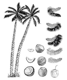 Conjunto de coqueiros, seus frutos e folhas. conjunto de desenho de coqueiros.