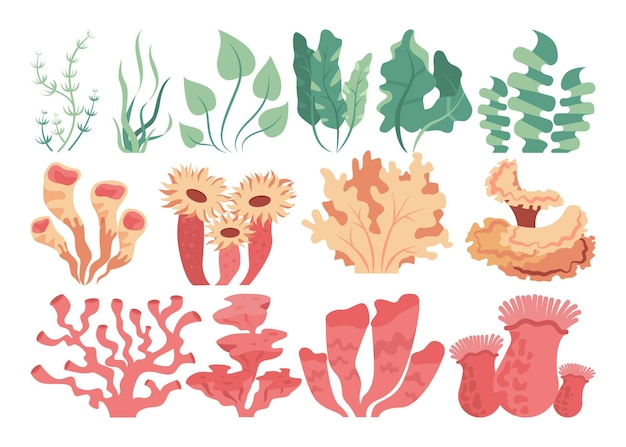 Conjunto de corais do fundo do mar e algas marinhas. lindos animais e plantas do mundo subaquático. natureza de paisagem tropical. ilustração vetorial plana