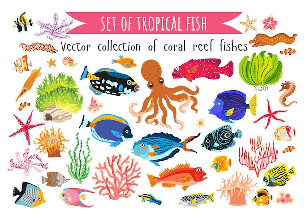 Conjunto de corais peixes e algas marinhas em estilo simples, isolado no fundo branco.