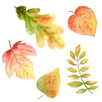 Conjunto de cores brilhantes lindas de folhas de outono.