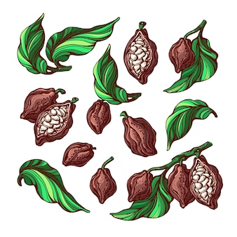 Conjunto de cores de cacau folhas de feijão de frutas tropicais desenho colorido desenhado à mão