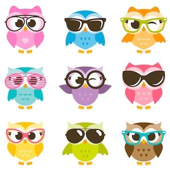 Conjunto de corujas coloridas de desenho animado com óculos de sol