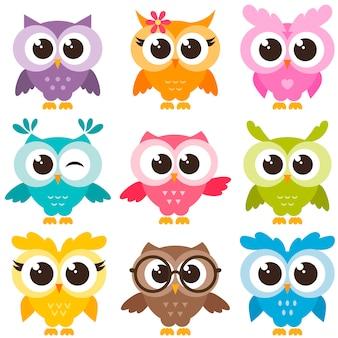 Conjunto de corujas engraçadas coloridas