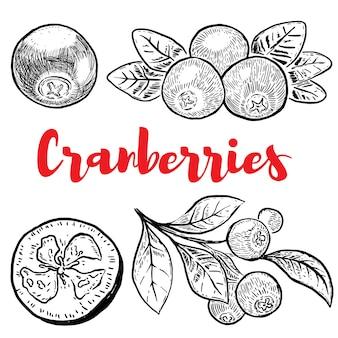 Conjunto de cranberries mão desenhada sobre fundo branco. elementos para etiqueta, emblema, sinal, cartaz, menu. ilustração