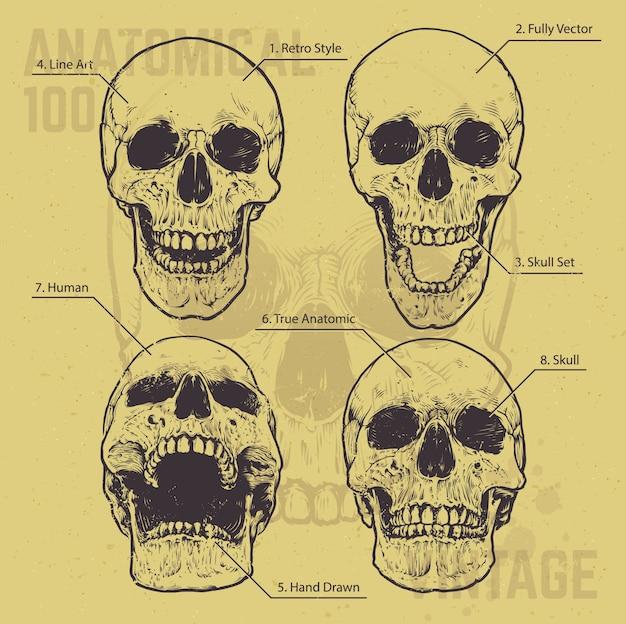 Conjunto de crânios desenhados mão