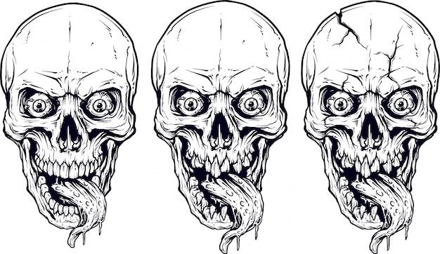Conjunto de crânios humanos brancos detalhados e maxilas