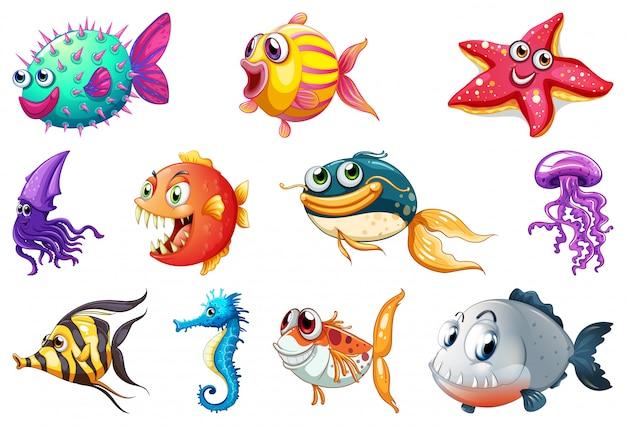 Conjunto de criatura marinha