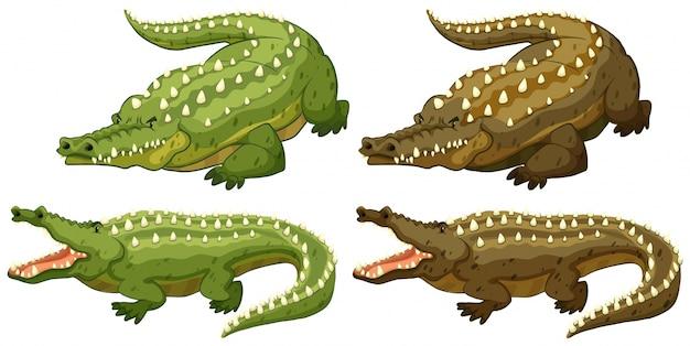 Conjunto de crocodilos verdes e marrons