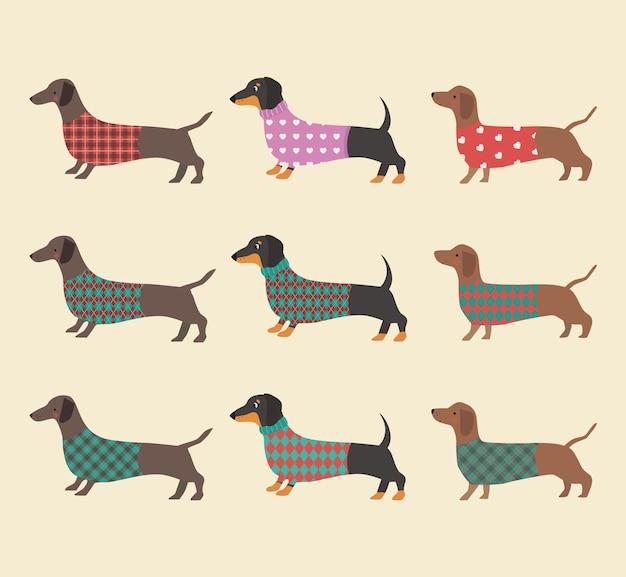 Conjunto de dachshunds com roupas.