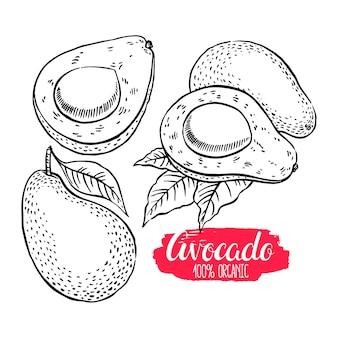 Conjunto de delicioso esboço maduro abacate. ilustração desenhada à mão