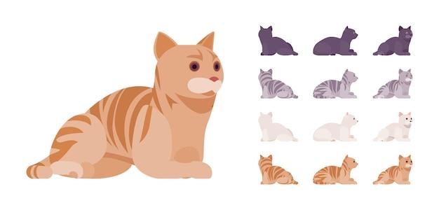 Conjunto de descanso deitado gato de pedigree listrado branco, preto, laranja, cinza. gatinho ativo e saudável com pelo bonito, animal de estimação engraçado e fofo, companheiro lúdico em casa. vistas diferentes da ilustração vetorial de estilo simples dos desenhos animados