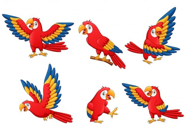 Conjunto de desenho animado papagaio engraçado. ilustração