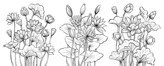 Conjunto de desenho de flor de lótus, mão desenhada