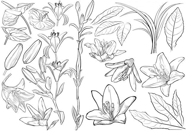 Conjunto de desenho de flores exóticas preto e branco