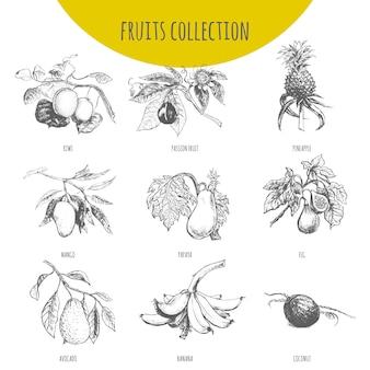 Conjunto de desenho de ilustração botânica de frutas exóticas