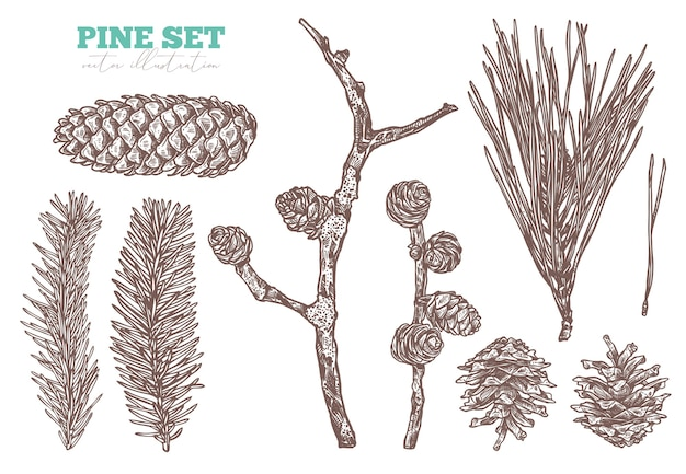 Conjunto de desenho floral desenhado de mão conífera. ramos e cones de pinheiro, abeto, abeto e larício