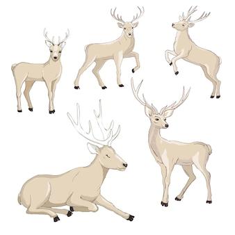 Conjunto de desenhos animados bonitos dos cervos.