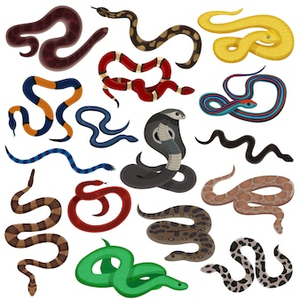Conjunto de desenhos animados de cobras peçonhentos