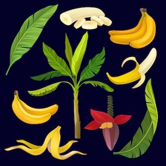 Conjunto de desenhos animados de doces bananas amarelas, folhas verdes e palmeira. ícones coloridos de frutas tropicais.