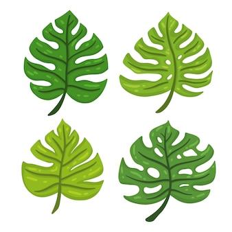 Conjunto de desenhos animados de folhas tropicais monstera.