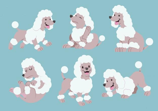 Conjunto de desenhos animados de poodle