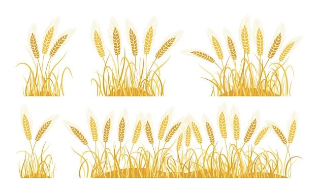 Conjunto de desenhos animados de trigo de orelhas de campo douradas espigas maduras coleta de trigo produção de farinha de panificação de aveia agrícola