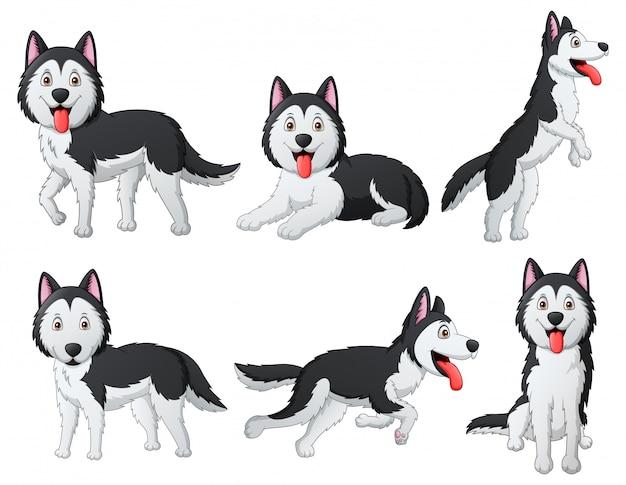Conjunto de desenhos animados engraçados cão husky siberiano. ilustração