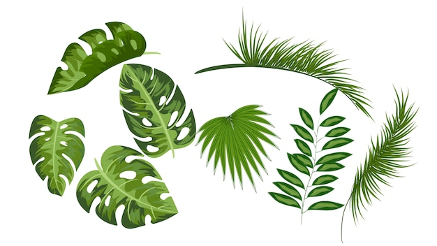 Conjunto de desenhos de coleção de folhas tropicais