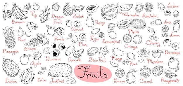 Conjunto de desenhos de frutas para menus de design, receitas e pacotes de produtos. ilustração