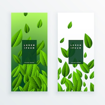 Conjunto de design de cartão de folhas verdes