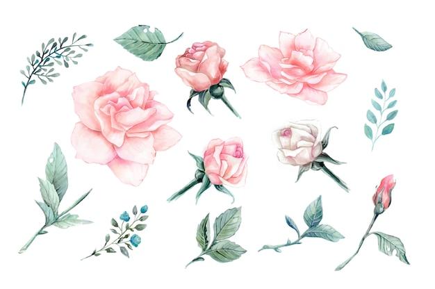 Conjunto de design vintage aquarela rosas cor de rosa.