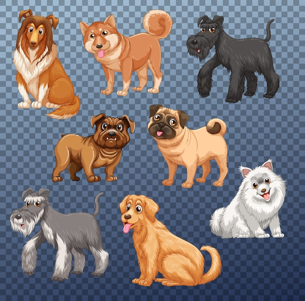 Conjunto de diferentes cães isolados