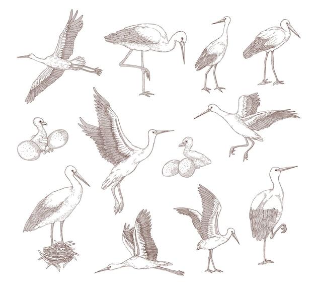 Conjunto de diferentes cegonhas ilustração gráfica plana monocromática.