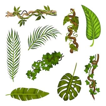 Conjunto de diferentes folhas e caules close-up.