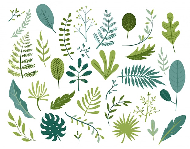 Conjunto de diferentes folhas tropicais e outras isoladas.