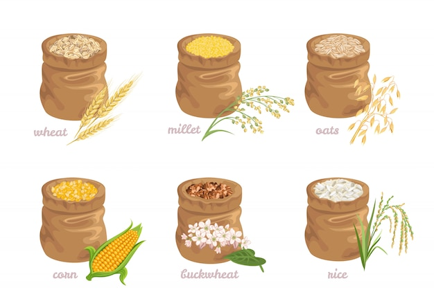 Conjunto de diferentes grãos de cereais em sacos.