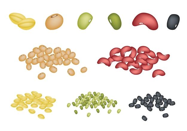 Conjunto de diferentes grãos no fundo branco