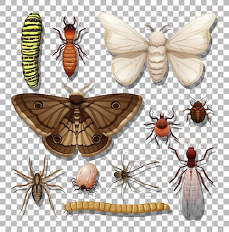 Conjunto de diferentes insetos em fundo transparente