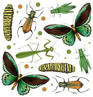 Conjunto de diferentes insetos