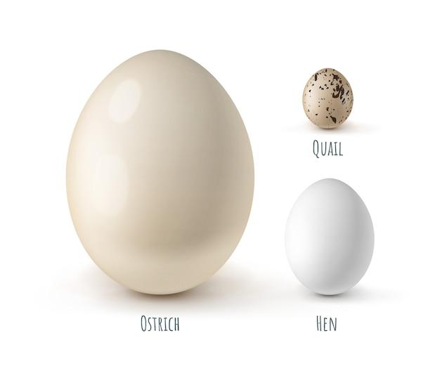 Conjunto de diferentes ovos ovos de avestruz