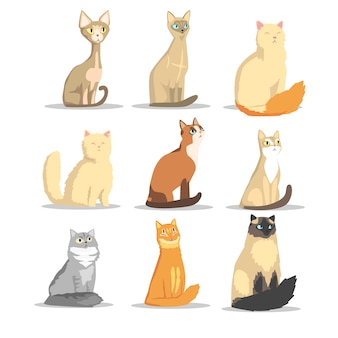 Conjunto de diferentes raças de gatos, ilustrações de animais de estimação fofos