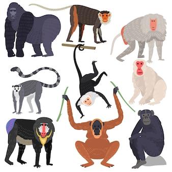 Conjunto de diferentes tipos de animais raros de macacos.