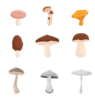 Conjunto de diferentes tipos de cogumelos. fungos florestais venenosos comestíveis e mortais. elementos para cartaz de livro ou infográfico