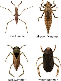 Conjunto de diferentes tipos de insetos e besouros com nome