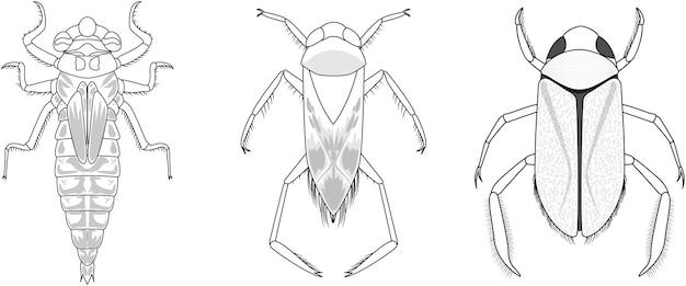 Conjunto de diferentes tipos de insetos e besouros