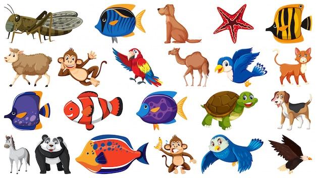 Conjunto de diferentes tipos de peixes e pássaros